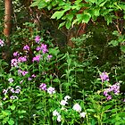 Woodland Garden by Nadya Johnson