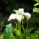 Lily in a Dingle Garden by Alice McMahon