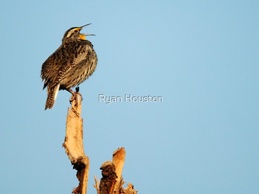 "Western Meadowlark - ""Sing a Song"" by Ryan Houston"