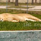 Sleepy time by LMGstudio