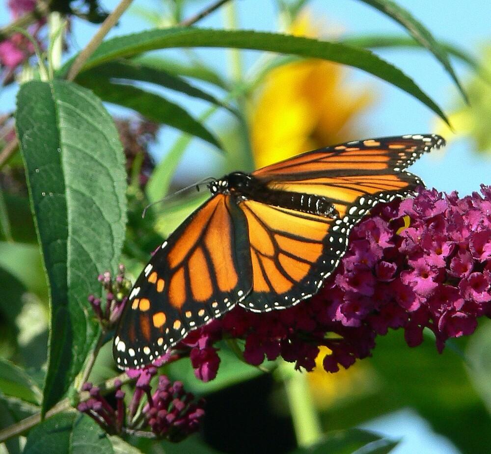 Fall Monarch Butterfly by LjMaxx