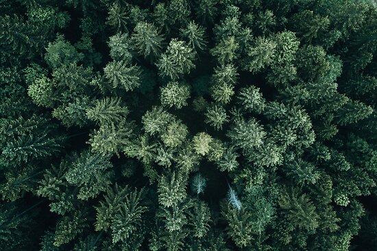 Forest Drone - Landschaftsfotografie von Michael Schauer