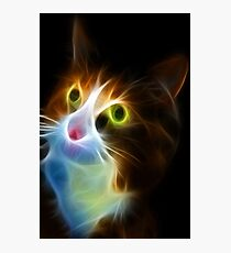 <º))))>< U LIGHT UP MY LIFE CAT VERSION TWO CARD/PICTURE<º))))><  Photographic Print