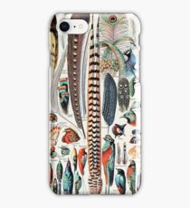 Vintage Feather and Bird Illustration iPhone Case/Skin