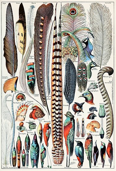 Vintage Feather and Bird Illustration by fineearth