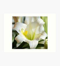 Easter Lilly Art Print