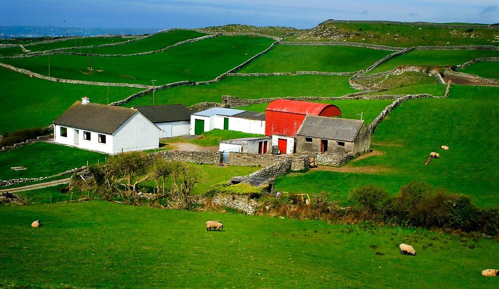 Ireland green fields by Gerard  Horan