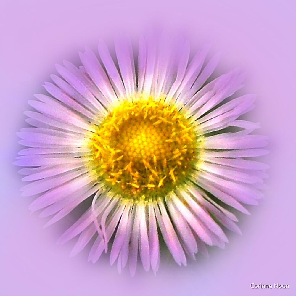 Purple Wood Aster  by Corinne Noon