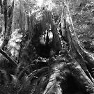 """Stump"" by David Lee Thompson"