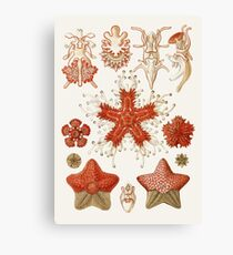 Starfish Chart Illustration Canvas Print