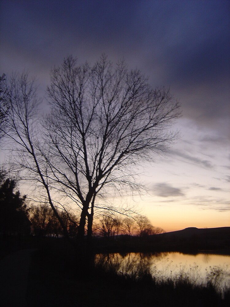 Tree at Dusk by Jerry Stewart