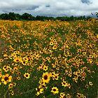 Field Of Coreopsis by WildestArt