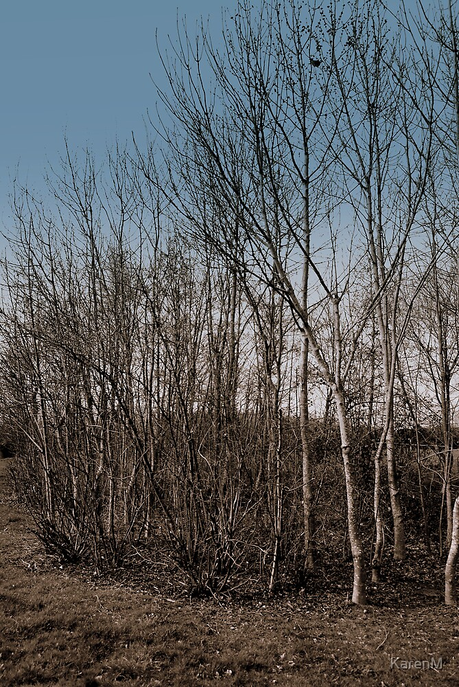 March Trees by KarenM