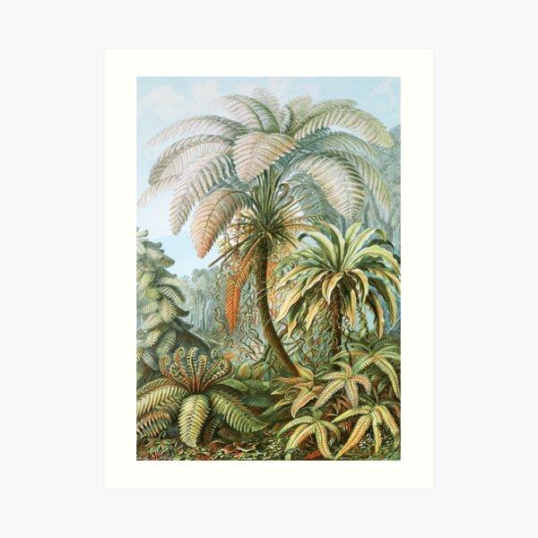 Vintage Fern and Palm Tree Art Art Print