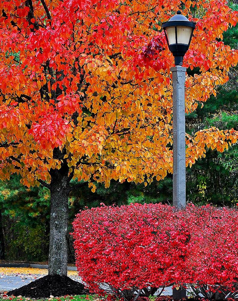 Fall Color in Cracker Barrel Parking Lot by BlueSmoke