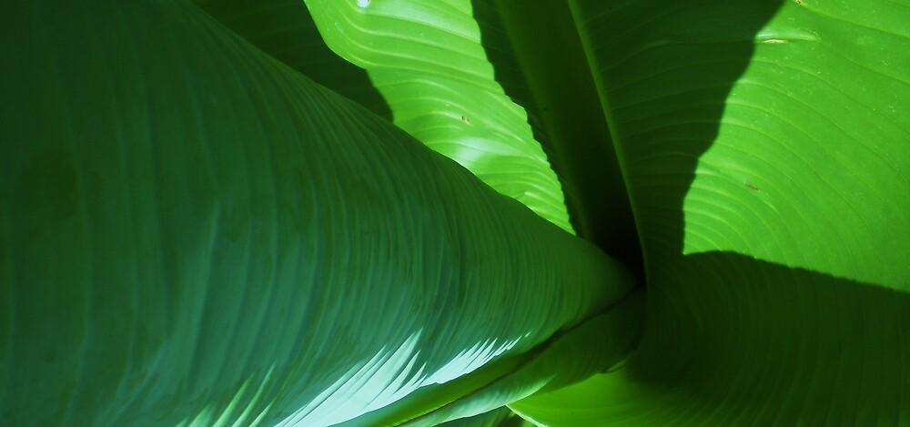 Banana Swirl by Jeff Brewster