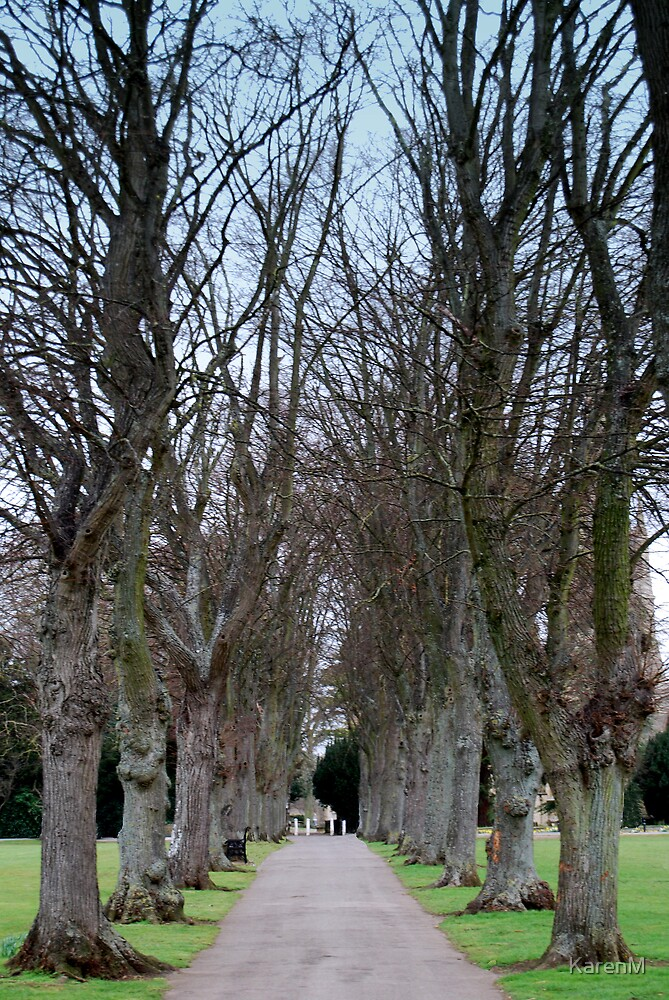 Tree Avenue by KarenM