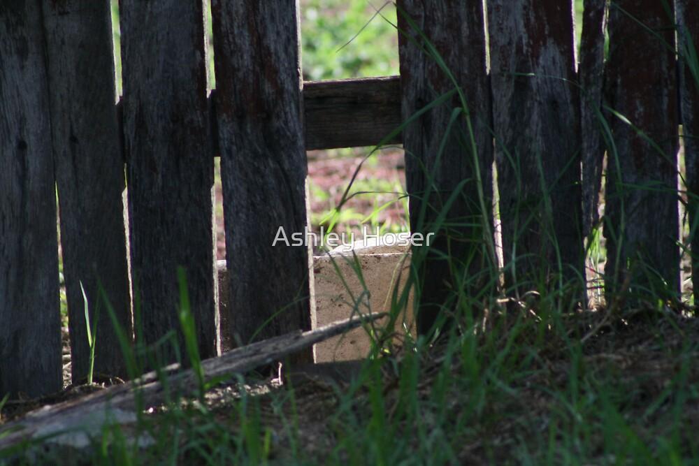 Fence by Ashley Hoser