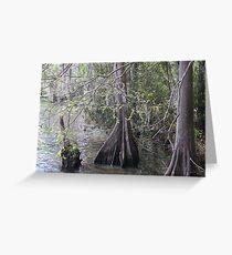Cypress Trees Greeting Card