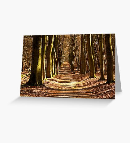 Forest Path in Spring Light Greeting Card