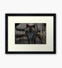 The Big Bad Wolf Framed Print