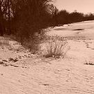 Winter Beach V by XtomJames