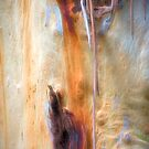 The Tree Bark Collection # 14 - Mount Wilson NSW by Philip Johnson