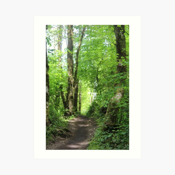 Serene Wooded Pathway Art Print