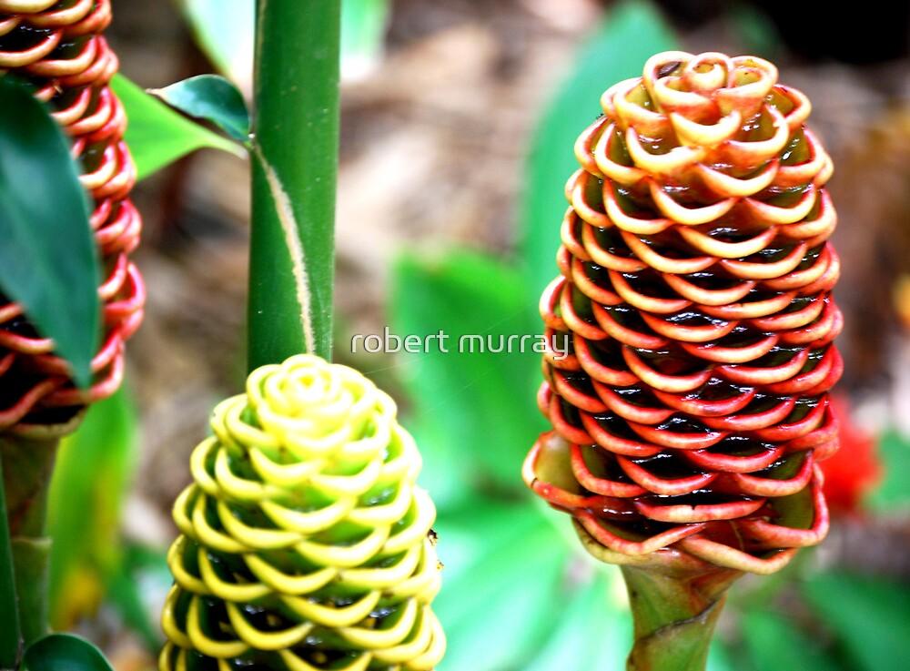 beehive ginger series 5 by robert murray