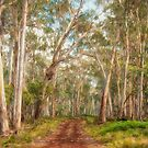 A Road Less Travelled - Coolah Tops National Park by Philip Johnson
