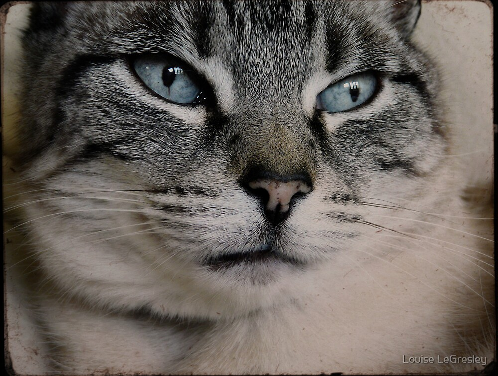 { old blue eyes } by Louise LeGresley