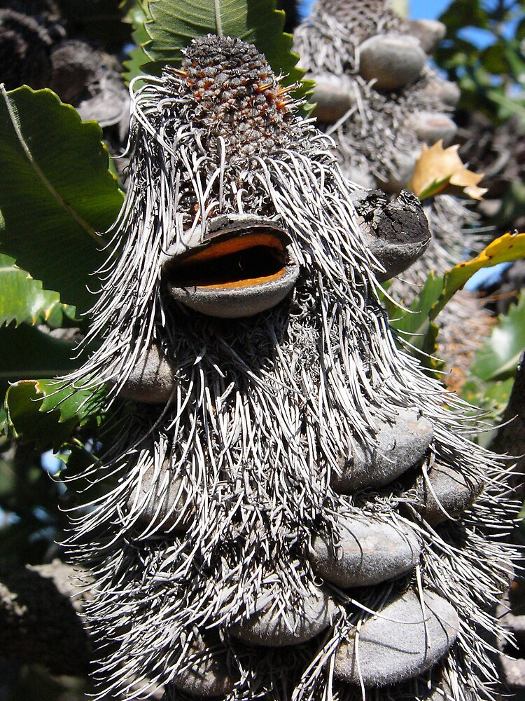 Banksia Man by Paul Hunter
