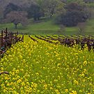 Old Vines and Mustard by Barbara  Brown