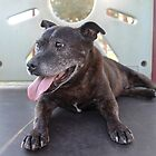 Elderbull Fat Flea 15 Years Young by Vicki Childs