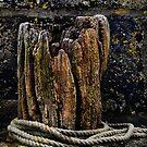 Ye Olde Oak by kcphotography