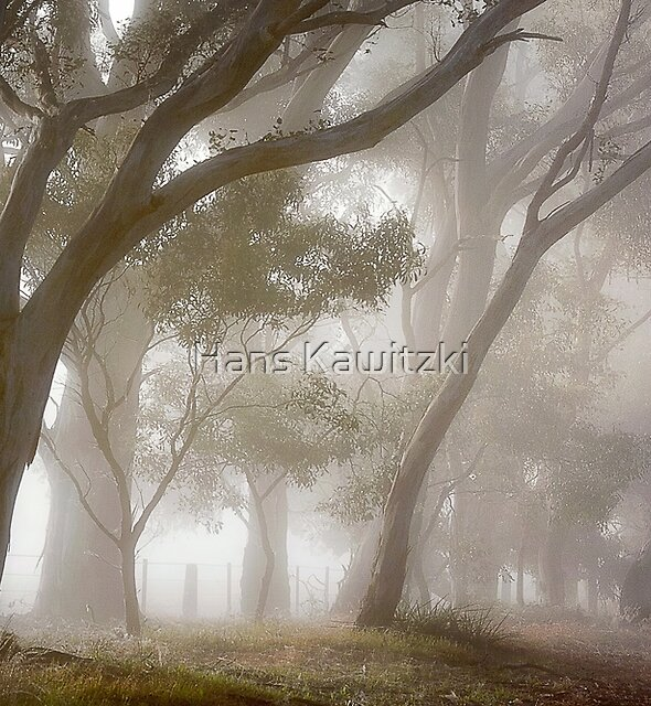 0658 Covered in fog - Anakie by Hans Kawitzki