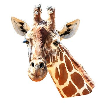 Giraffe looking at You by Dalyn