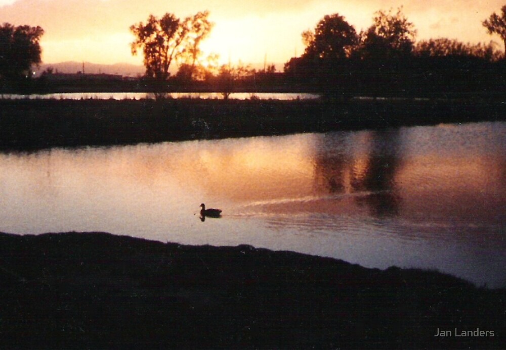 Sunset Swim by Jan Landers