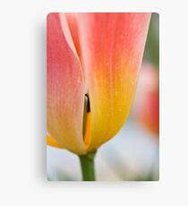 Anatomy of a Tulip = The Slip Canvas Print