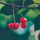 Red Cherries by Milan Surbatovic
