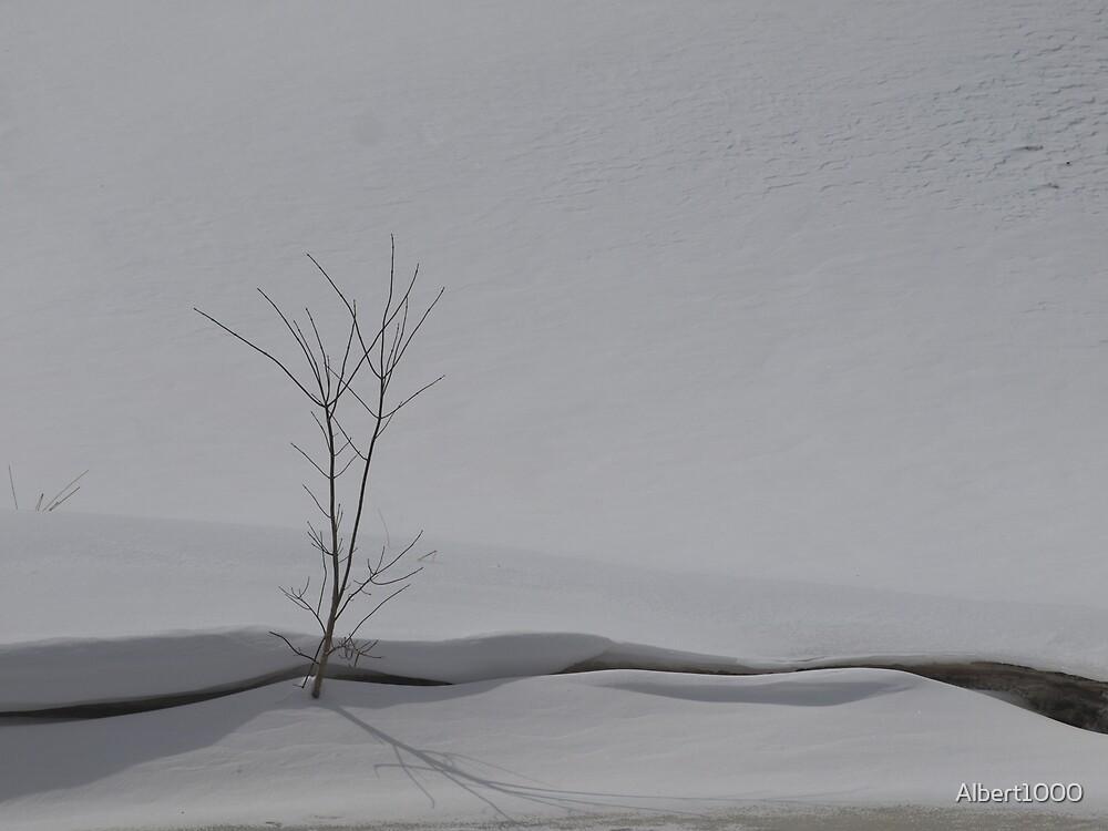 NC Winter scene #2 by Albert1000