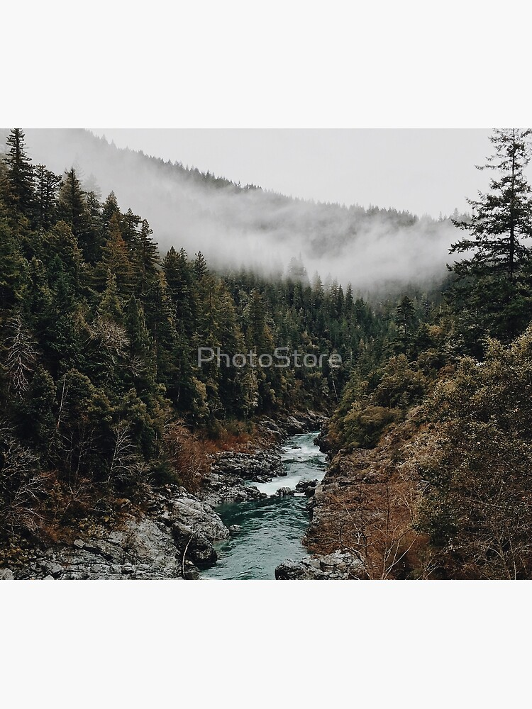 River in the Forest by PhotoStore