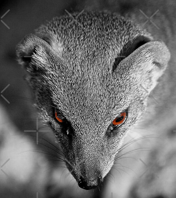 brown eyes by nitelite