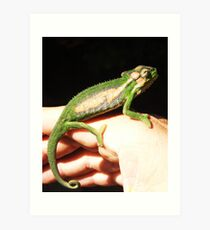 Cape Dwarf Chameleon (Bradypodion pumilum) Art Print
