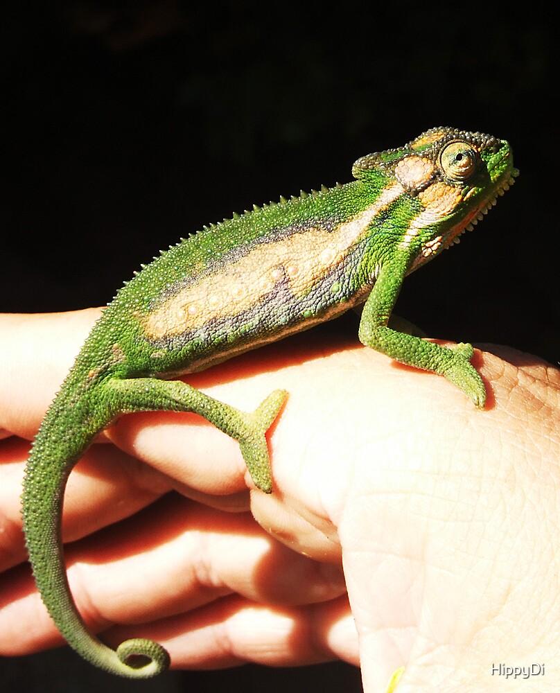 Cape Dwarf Chameleon (Bradypodion pumilum) by HippyDi