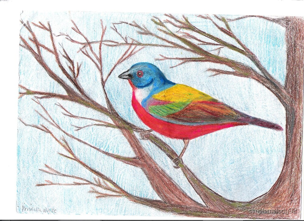 Painted Bunting by simplemelody92
