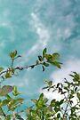 Aquatic Foliage by Elaine Teague