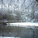 Snowey pond in our paradise by jules / Missy frost
