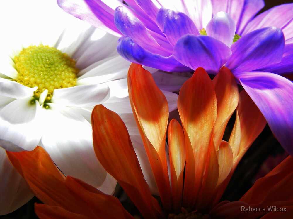 Spring by Rebecca Brann