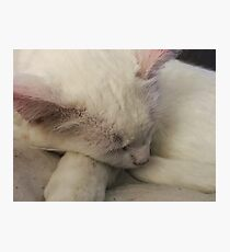 Sleepy kitty time Photographic Print